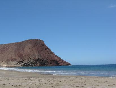 Beach Naturalist