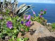 Der wunderschöne Norden von Gran Canaria